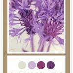 Color Card 020: Concrete, Lavender Bud, Napa Purple, Light Plum