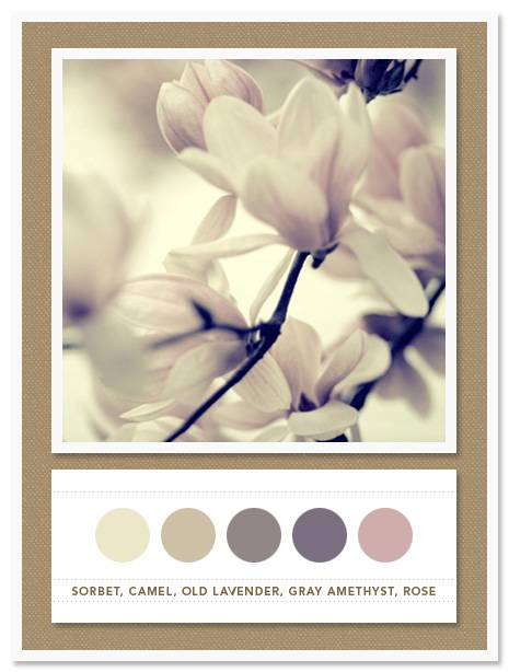 Color Card 026