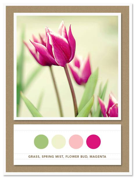 Color Card 034