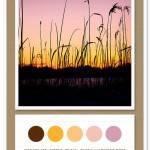 Color Card 038: Chocolate, Citrus, Peach, Blush, Lavender Rose