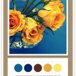 Color Card 046: Cerulean, Deep Sea, Chocolate, Citrus, Lemon