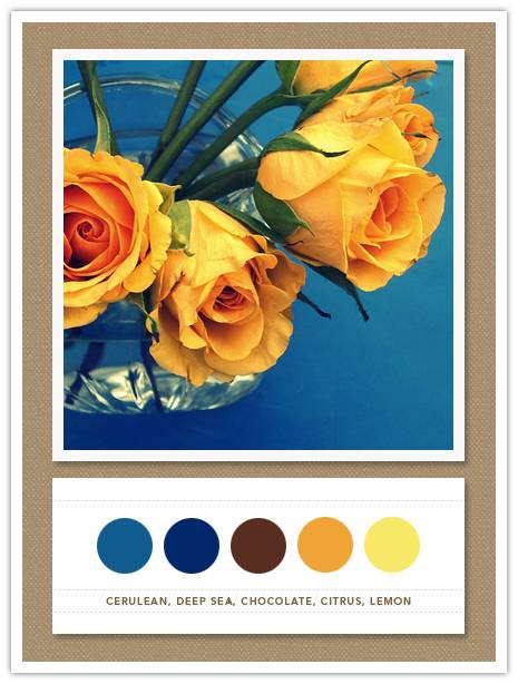 Color Card 046
