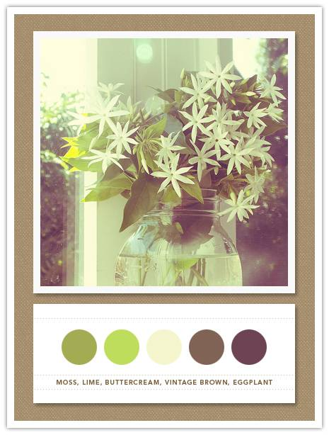 Color Card 050