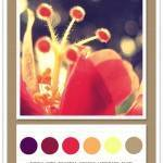 Color Card 049: Purple, Wine, Magenta, Orange, Lemonade, Taupe
