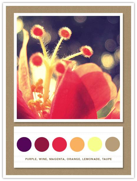 Color Card 049