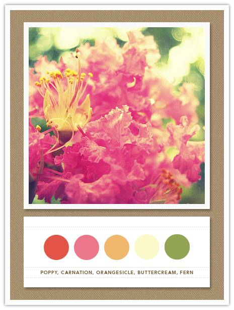 Color Card 051