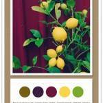 Color Card 062: Milk Chocolate, Eggplant, Wine, Sunflower, Spring Green