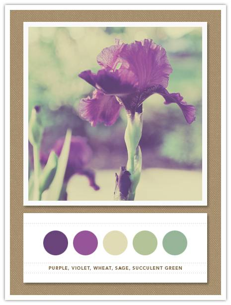 Color Card 079
