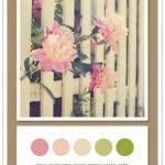 Color Card 081: Rose, Blush Pink, Khaki, Spring Green, Fern