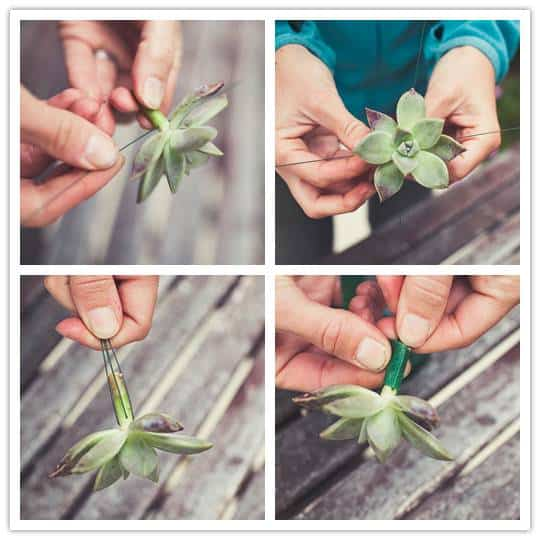 succulentssteps Do It Yourself Project: Desert Bloom Boutonniere