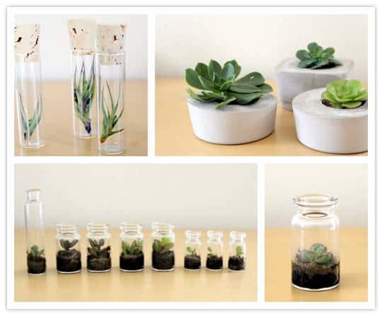 succulents Fabulous Favors: Mini Terrariums from Tortoise Loves Donkey