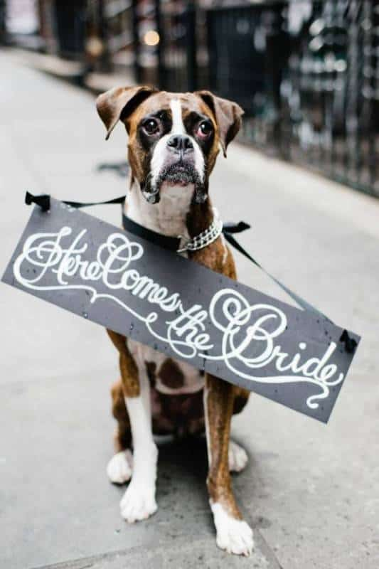 doggy-signage-wedding