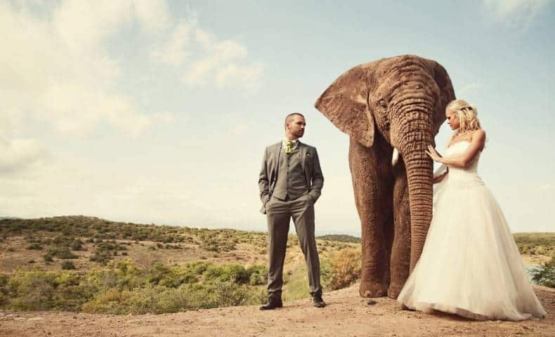 elephant-in-wedding-1024x622